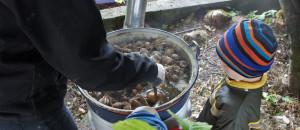 almtaler weideschwein fütterung